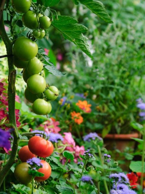 landscapes_that_work_edible_garden_lg