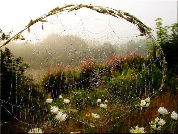 fog-53010_640